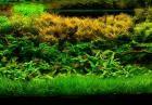 Akwaria roślinne
