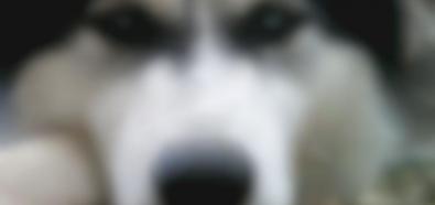 Kochasz Swojego Psa A Więc Jesteś Człowiekiem Cytaty O