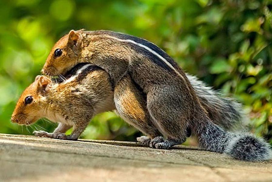 Свежие фотографии животных. Забавные мордочки животных.