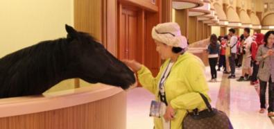 Chińskie muzeum koni