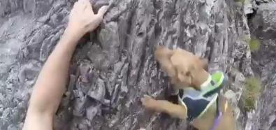 Wspinaczka z psem