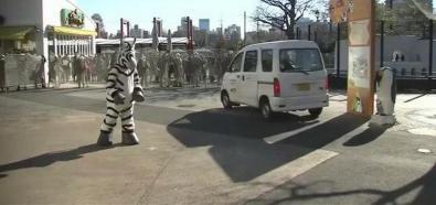 Sztuczna zebra w Tokio