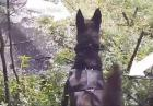 Psi policjant w akcji