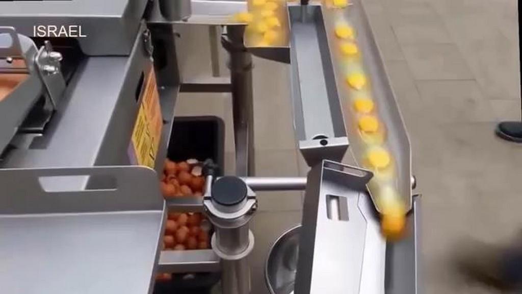 Jaja w przemyśle