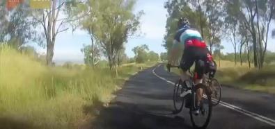 Kangur vs. rowerzystka