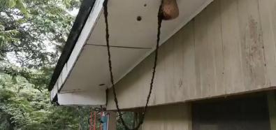 Atak mrówek na osy