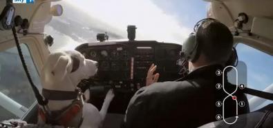 Pies pilotuje samolot