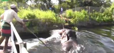 Słoń uwięziony w kanale