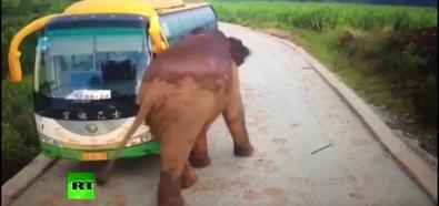 Słoń vs Autobus