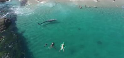 Wieloryb przy plaży