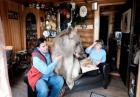 Mieszkanie z niedźwiedziem