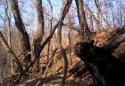 Przebudzenie niedźwiedzia