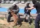 Psi ochroniarz w akcji