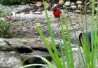 Ptak karmi ryby