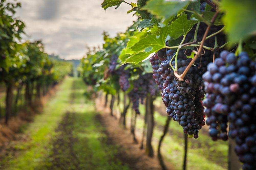 Wino - jak dobrać idealne trunki na każdą okazję?