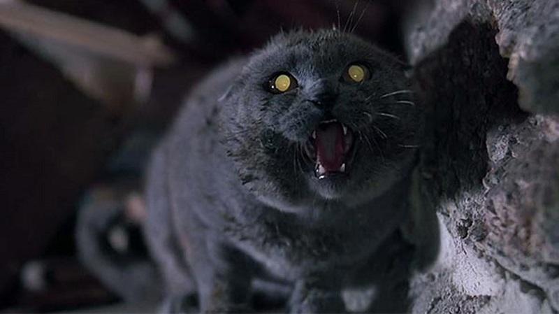 Smętarz dla zwierzaków - pierwszy, niepokojący zwiastun horroru