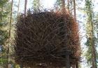 Hotel na drzewie tylko dla odważnych