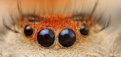 Piękno owadów w fotografii Igora Siwanowicza