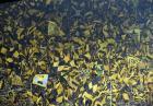 Włamanie kibiców Borussii na stadion Bayernu?