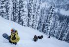 Ben Ferguson szaleje na snowboardzie między drzewami
