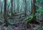 Las Aokigahara